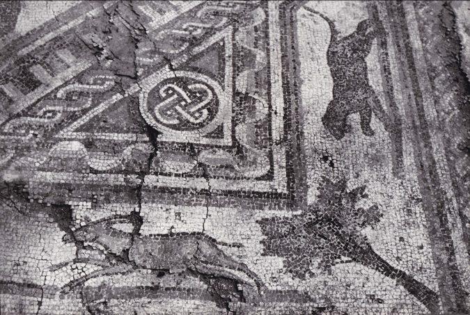 panik-rimski-mozaik-zivotinje-panter-i-divokoza